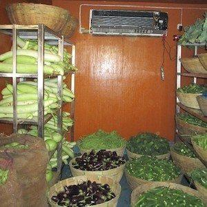 coldroom-working-on-solar-panel-for-fruits-and-vegetables